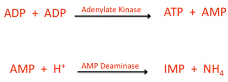 PCR system adenylate kinase
