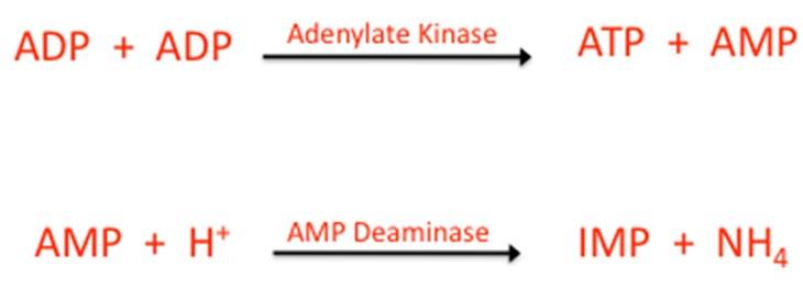 PCR system adenylate kinase