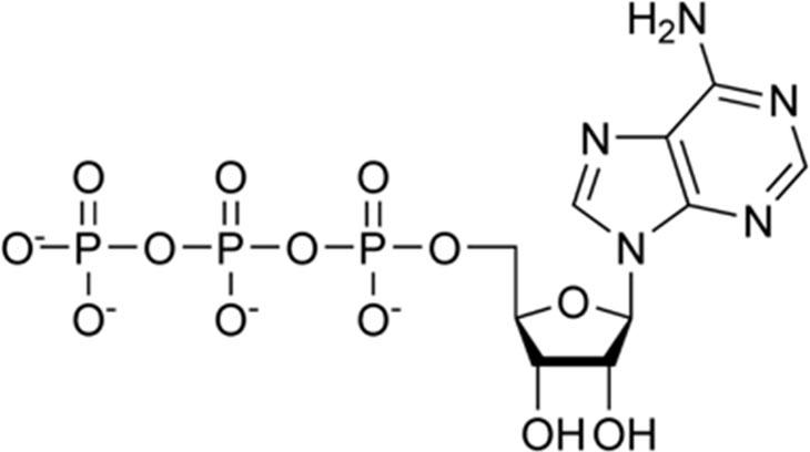 Illustration of the ATP molecule