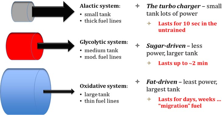 Differences between enery use-the enery system